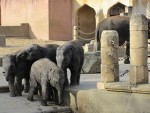 Hotels, Appartements, Hostels, Pensionen - Erlebnis-Zoo Hannover